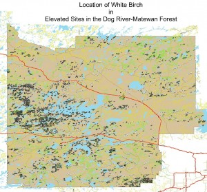 Location of White Birch in Elevated Sites