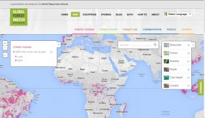 Global Forest Change Map: World Resource Institute