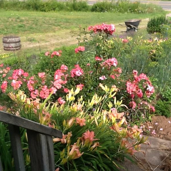 Robert Maher Flowers Nova Scotia